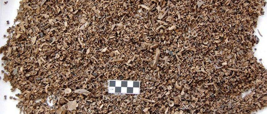 archaeform-fishbones-archeology-history